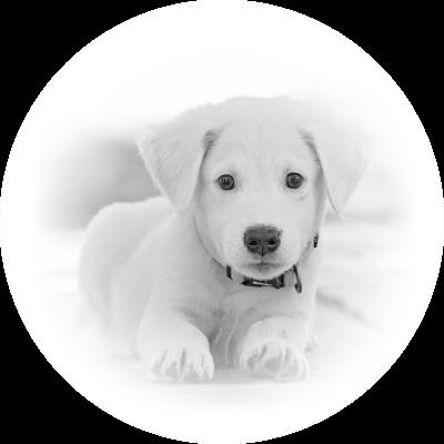 icona veterinaria